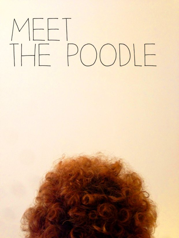 Meet the Poodle
